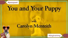 Dog Training Videos  Puppy Training  You And Your Puppy: Toilet Training  04/22/2017  You And Your Puppy- Toilet Training  Part 11_11  Carolyn: Hi Steph. Its great to see Lizzie. How long have you had it?  Steph: Only actually about a week Carolyn. But were okay were getting it slowly but surely and I hoping you can help us out with a few bits and pieces.  Carolyn: Im sure I can.  Steph: Ive heard quite a few scary stories about how difficult it is to toilet train a puppy. Is that true?…