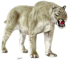 Scimitar-toothed Cat | giant scimitar toothed cat by jagroar traditional art paintings ..., Lived world-wide. Became extinct in Africa around 1.5 million years ago, lasting in America until 10,000 years ago.