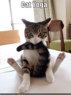Cat Yoga- I don't know why but this cracked me up!
