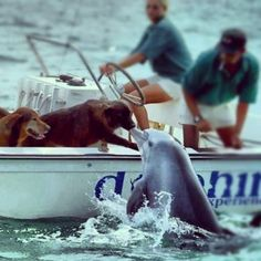 Amazing Dolphin Kissing a Dog on a Boat. Dolphins are merely just dogs in water! <3