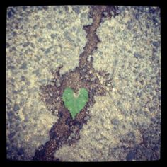 Beauty in unexpected places ♥