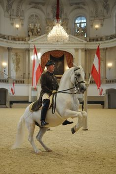 Historically dressed riders give performances set to classical music. The all white Lipizzaner stallions perform elegant routines requiring precise training. Even if you dont love horses this is a must see in Vienna! All The Pretty Horses, Beautiful Horses, Spanish Riding School Vienna, Lippizaner, Lipizzan, Dressage Horses, Andalusian Horse, Majestic Horse, Horse World