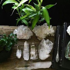 Clear quartz crystals and plants