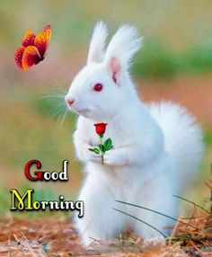 Top Good Morning Images, Good Morning Images For Whatsapp, Best Good Morning Images, Good Morning Quotes - Mixing Images Sweet Good Morning Images, Good Morning Friends Images, Good Morning Beautiful Pictures, Good Morning Images Flowers, Good Morning Roses, Good Night Love Images, Good Morning Cards, Good Morning Photos, Love Good Morning Quotes