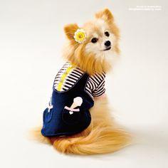 dogfashionesta Most stylish Dogs on Tumblr.Cuun -Luxury Dog Apparel Magazine- from Japan.