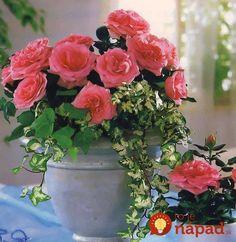 Spoznajte ich a vyskúšajte ich silu u vás doma. Beautiful Flowers Wallpapers, Flower Wallpaper, Feng Shui, Planter Pots, Floral Wreath, Wreaths, Landscape, Plants, Gifs