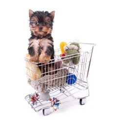 Top 10 Essential Puppy Supplies