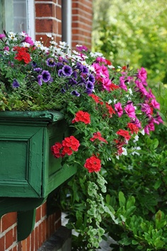 window box.... with great mix of plants and colors!!!