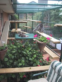 Pet owners are increasingly keeping their cats safe by providing them with a cat enclosure. We look at commercial cat enclosures with accompanying photos. Diy Cat Enclosure, Outdoor Cat Enclosure, Reptile Enclosure, Outdoor Cat Run, Cat Fence, Living With Cats, Cat Cages, Cat Garden, Cat Room