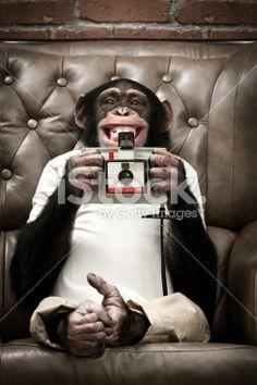 Photographe, Singe, Humour, Appareil photo,