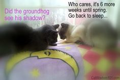 Pin cat  Quotes | Cat Wisdom 101 | Caturday Groundhog Day