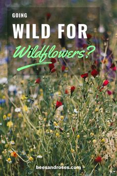 Are you going wild for wildflowers? Wildflowers are actually the perfect flowers for your garden because they are low maintenance and easy to care for!
