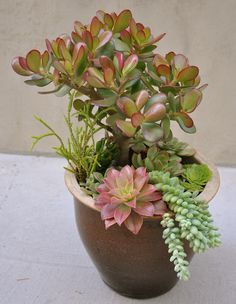 More Pot - 43 Outstanding Succulent Gardens You Can Create at Home . SourceThis would look fantastic on a bathroom counter or beside table.Do you grow succulents? What's your favorite way to arrange them? Growing Succulents, Succulents In Containers, Cacti And Succulents, Container Plants, Planting Succulents, Container Gardening, Planting Flowers, Container Flowers, Succulent Gardening