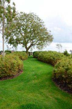 notelaar, landelijke tuin, glooiende haag, haagbeuk, gazonpad Garden Architecture, Garden Landscaping, Outdoor Gardens, Lawn, Garden Design, Golf Courses, Sidewalk, Backyard, Scrapbook