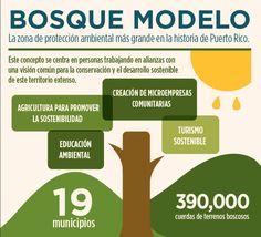 Cámara de Representantes inicia los trabajos con el proyecto de ley que crearía el Bosque Modelo.