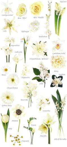"""Have you ever found a picture of a bouquet and wondered, """"What is that flower?"""" Here is a collection of flower names sorted by color. A few bouquet examples are at the bottom and some non-tradi..."""