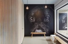 View full picture gallery of Veterinary Practice BooZoo Pet Shop, Dog Grooming Shop, Dog Room Decor, Vet Office, Dog Cafe, Pet Hotel, Pet Boarding, Pet Style, Dog Artwork