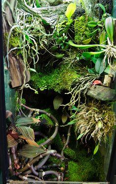 Orchidarium 2/2013   Flickr - Fotosharing!