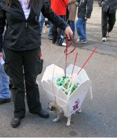 Great Costume!! - CHINESE FOOD PUG