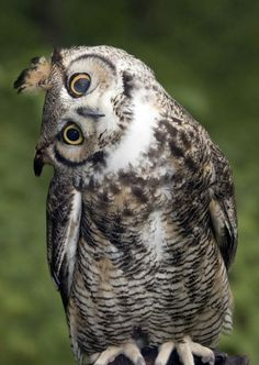 say what?! #owl