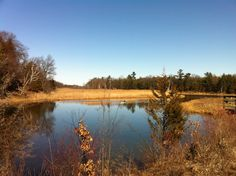The Pinery, Ontario