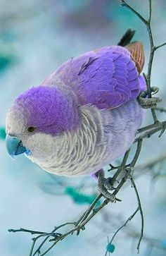 What cool looking parrot type bird