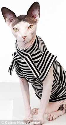 clothing for hairless cats!