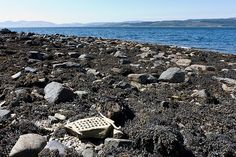 Scotland Loch Fyne Shell Sculpture by JRT Pickle