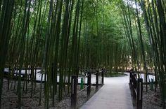 울산태화강대공원 십리대밭숲