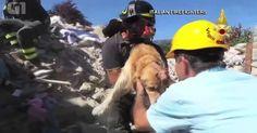Cachorro é resgatado de escombros nove dias após terremoto na Itália