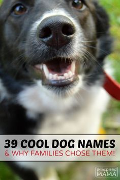39 Dog Names and Why Families Picked Them - at B-Inspired Mama - #AD #IamsDifference