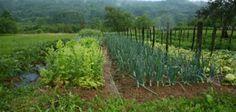 1.200 specie di piante per nutrirsi: e adesso? - Cibo - World Wine Passion