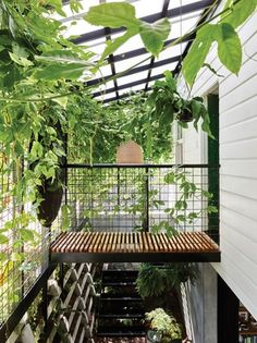 Inside the Terrarium House, an incredible extension of a cottage by owner-architect John Ellway. Cottage Door, Old Cottage, Terrarium, Jardin Luxuriant, Architecture Résidentielle, Brisbane Architecture, Jungle House, Garden Design, House Design