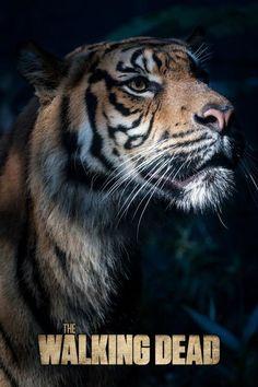 Asdfgjjnlpuevmjj ¡El Tigre! *~*