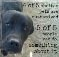Adopt...you can find a rescue group for every conceivable breed of pet...don't buy from a breeder...adopt instead.