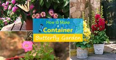 Who do not love butterflies and making a butterfly container garden is a great way to invite beautiful butterflies fluttering across your urban garden.