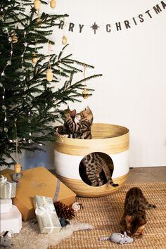 Julafton. Julgran. Eda Ekollon Ekologisk Furu. Mimi Mus. Kattleksaker. Bengal. Kattungar. Christmas Cats, Dog Cat, Planter Pots, Kitty, Dogs, Design, Little Kitty, Kitty Cats, Pet Dogs