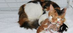 5 Beautiful Photos of Super Mom Cat and Her Tiny Kittens