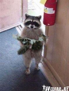 I found your cat ...