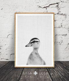 Caneton impression Photo de bébé canard pépinière ferme