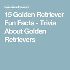 15 Golden Retriever Fun Facts - Trivia About Golden Retrievers