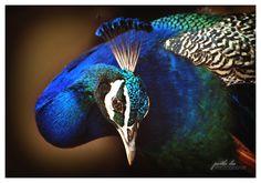 colourful mood! by Partha Das, via 500px