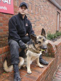 Cães são usados como 'armas' por pais que querem vigiar filhos em relação a drogas