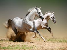 Horses with power and beauty