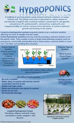 Method for growing plants using only water...no soil. Hydroponics Infographic
