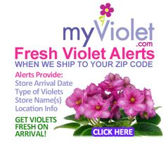 Plant Care Instructions for African Violets Amazon Rewards, Violets, Plant Care, Steak, African, Fresh, Steaks, Pansies