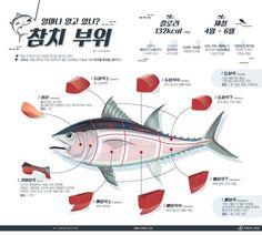 알고 먹어야 맛있는 참치 부위별 특징 [인포그래픽] | 비주얼다이브