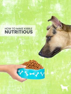 So you'd like to make kibble more nutritious for your dog ...   If your dog is still eating kibble for any reason … We want to help you make it more nutritious for him.
