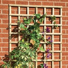 A lovely Grange Elite Lightweight Wall Trellis is fantastic for growing climbers or roses on and brings a new dimension to a plain wall.  #trellis #climbers #roses