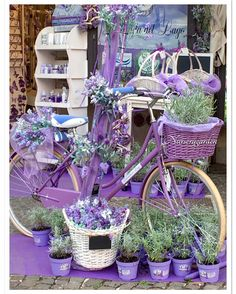 23 Clever DIY Christmas Decoration Ideas By Crafty Panda Lavender Decor, Lavender Crafts, Lavender Cottage, Lavender Garden, Garden Yard Ideas, Love Garden, Beautiful Gardens, Beautiful Flowers, Paris Garden